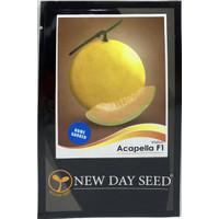 Benih New Day Seed - Melon Acapella F1