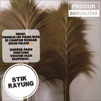 STIK RAYUNG ORIGINAL/PAMPAS LOKAL/DEKORASI RUSTIK/HOME DECOR