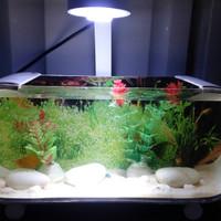 aquarium mini unik cupang