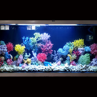 custom susun batu karang coral anemon asli dekorasi aquarium aquascape