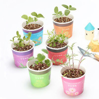 bibit tanaman landscape mini dengan pot hpl005