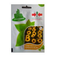 isi 10 Benih Bunga Helianthus Choco Sun Original Pack Panah Merah