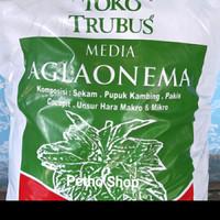 """media tanam aglonema """"TRUBUS"""""""