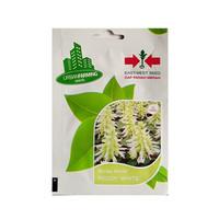 isi 20 Benih Bunga Salvia Splendens Reddy White Original Panah Merah