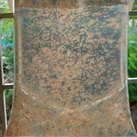 Daphnia Magna / Kutu Air JUMBO (Pakan Alami ikan/Stater)