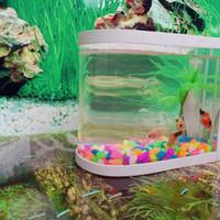 aquarium cupang mini unik milenial kekinian
