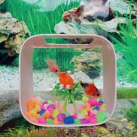 aquarium ikan cupang mini kotak unik costom