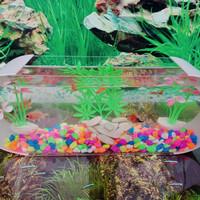 aquarium mini unik cupang koki hias kura