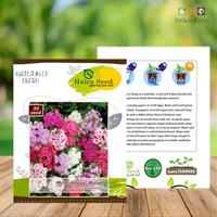 isi 30 Benih Bunga Phlox Annual Mixed Haira Seed