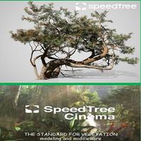 Speed Tree Cinema v8.1.0 x64 Software Pohon 3D GARANSI WORK