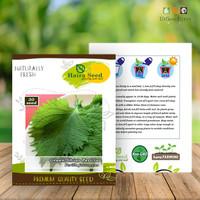 Isi 30 Benih Herb Shiso Perilla Green Haira Seed