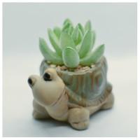 succulent artificial pot keramik high quality