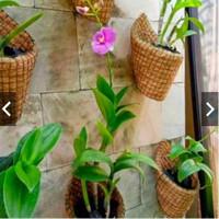 Pot Tempel dinding gantung Serabut anggrek sabut kelapa Murah Unik
