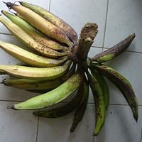 pisang tanduk 1 tandan