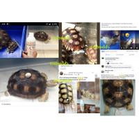 RSJ Ramuan Sakti Juragan Obat Blader Stone Cacing Jamur Virus Reptil - 100 ml