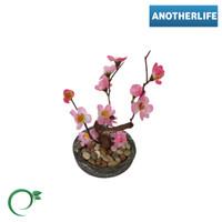 Bunga sakura Tamanan artificial / tanaman plastik / Tanaman sakura