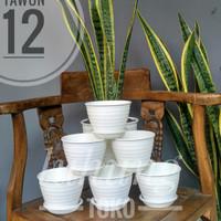 Pot Semai / Kaktus / Bunga / Sukulen Cantik TAWON 12 cm - Putih