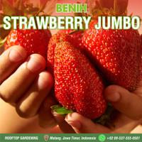Benih Strawberry Jumbo 100 Biji / Seeds