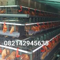 kandang ayam petelur plastik super