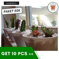 jual tanaman kaktus hias murah - harga terbaru 2021