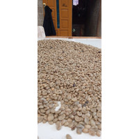 Greenbean Kopi Robusta Kerinci Wine Process Berat 1/2 Kg