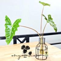 Pot Tanaman/Vas Kaca Bottle Shape/Vas Dekorasi/Propagate Glass Tube