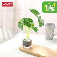 Aonez Bungan Hias Calla hijau bonsai dengan kaca persegi kecil