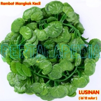 Lusinan Mangkok Kecil/Daun Rambat/Rumput Plastik/Busa Bunga/Oasis