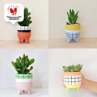 Paket bundle Pot & Kaktus Mini Leggie Pastel Fun Series