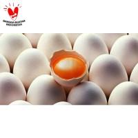 Telur Ayam Kampung Merah Segar / Fresh