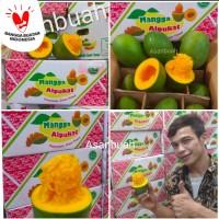 buah mangga alpukat harum manis TUA pohon avomango klonal /kg