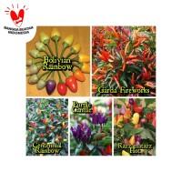 Benih / Bibit - PAket HEmat Cabe Rainbow Chilli Pepper (25 biji)