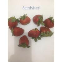 30 strawberry big buah benih biji