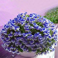Egrow 100 PCS Geranium Kebun Bibit pot Bunga Benih