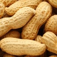 Biji / benih / bibit Kacang tanah / peanut / cabut (Glongdong/brkulit)