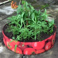 Vegetable Planter (Raised Bed) Tomato