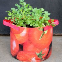 Vegetable Planter Tomato print