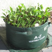 Vegetable Planter Large