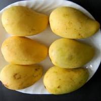 buah mangga chokanan