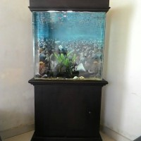 aquarium ikan hias unik set.