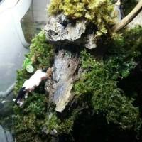 terima set up mini garden terrarium