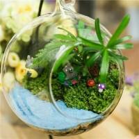 pot terrarium vas terrarium aquarium kaca mini fairy garden miniature