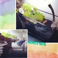 set up terrarium mini garden mini paludarium kolam ikan