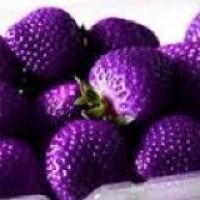 benih/bibit/biji/buah strawberry rainbow