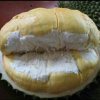 Paket 100 Bibit Tanaman Buah Durian Montong
