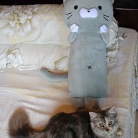Bantal Boneka Kucing (Puss Plushies)