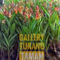 Tanaman Heliconia Bunga Merah | Pohon Pisangan
