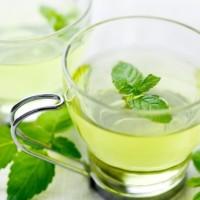 Bibit tanaman peppermint / daun mint