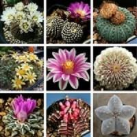 Biji Benih Bibit Bunga Kaktus/Succulent Cactus Mix - IMPORT