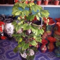 daun anggur artificial bonsai pajangan